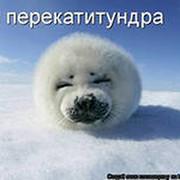 Александр Резников on My World.