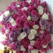 Ирина Шибанова on My World.